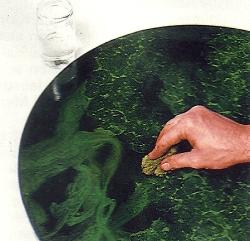 Marmormalerei, eine handwerkliche Technik mit langer Tradition
