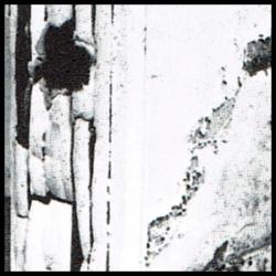 Holzschädlinge, Anzeichen von Holzbefall